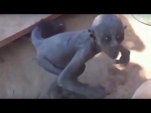 ЗАГАДОЧНЫЕ СУЩЕСТВА СНЯТЫЕ НА КАМЕРУ. ТОП 5 странных существ снятых на видео.