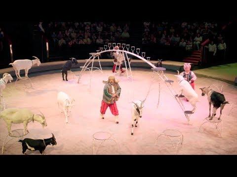 Вопрос: Как присоединиться к цирку?
