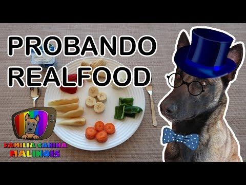 PERROS Probando REALFOOD/COMIDA REAL   Familia Canina Malinois Adiestramiento Canino