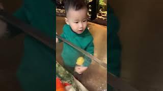 코엑스 아쿠아리움 물고기가 아기 손을!