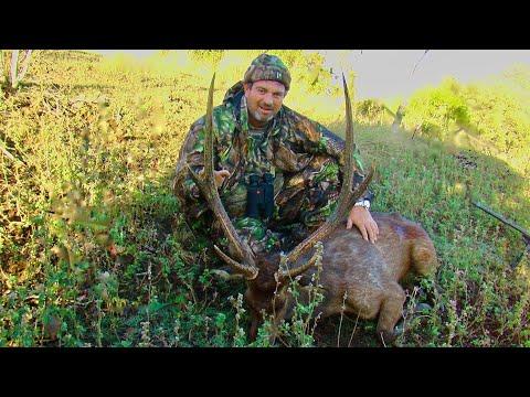 Hunting Rusa deer in New Caledonia part 30