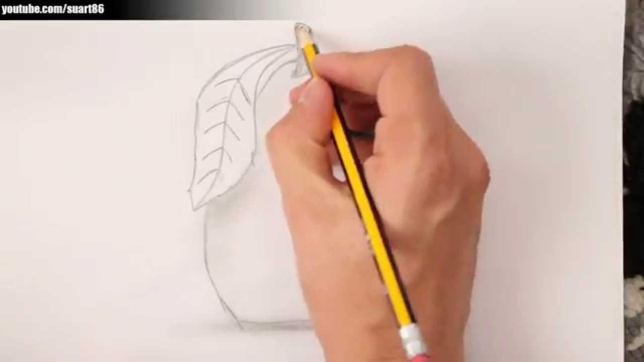 Como dibujar una pera paso a paso  YouTube