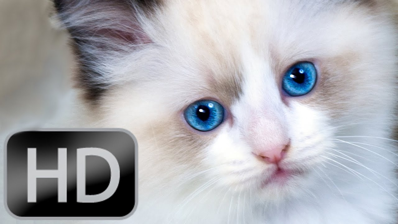 Cutest Kitties Go Right To Your Heart Cat Video Hd 1080p Youtube