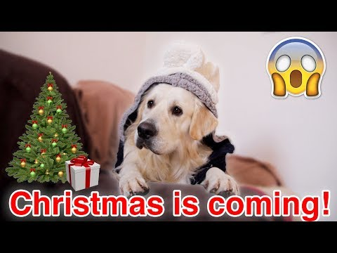 Dog Writes a Letter to Santa for Christmas!