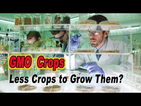 Do GMO Crops Mean We Can Use Fewer Pesticides To Grow Them?