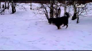 Бродячие собаки(, 2014-03-24T14:10:23.000Z)