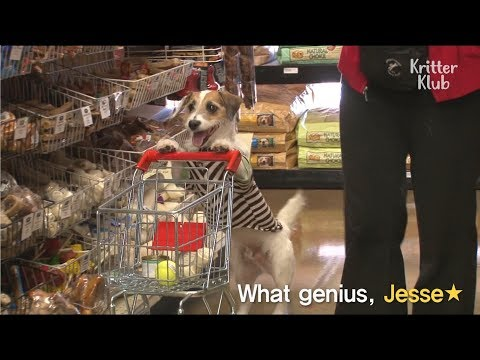 Jesse The Genius Dog Goes Shops For His Treats | SBS Animal
