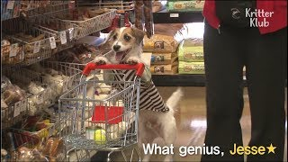 Jesse The Genius Dog Goes Shops For His Treats | Kritter Klub
