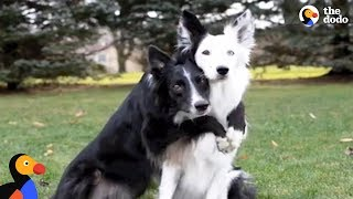 Hugging Rescue Dogs Get Cutest New Brother | The Dodo