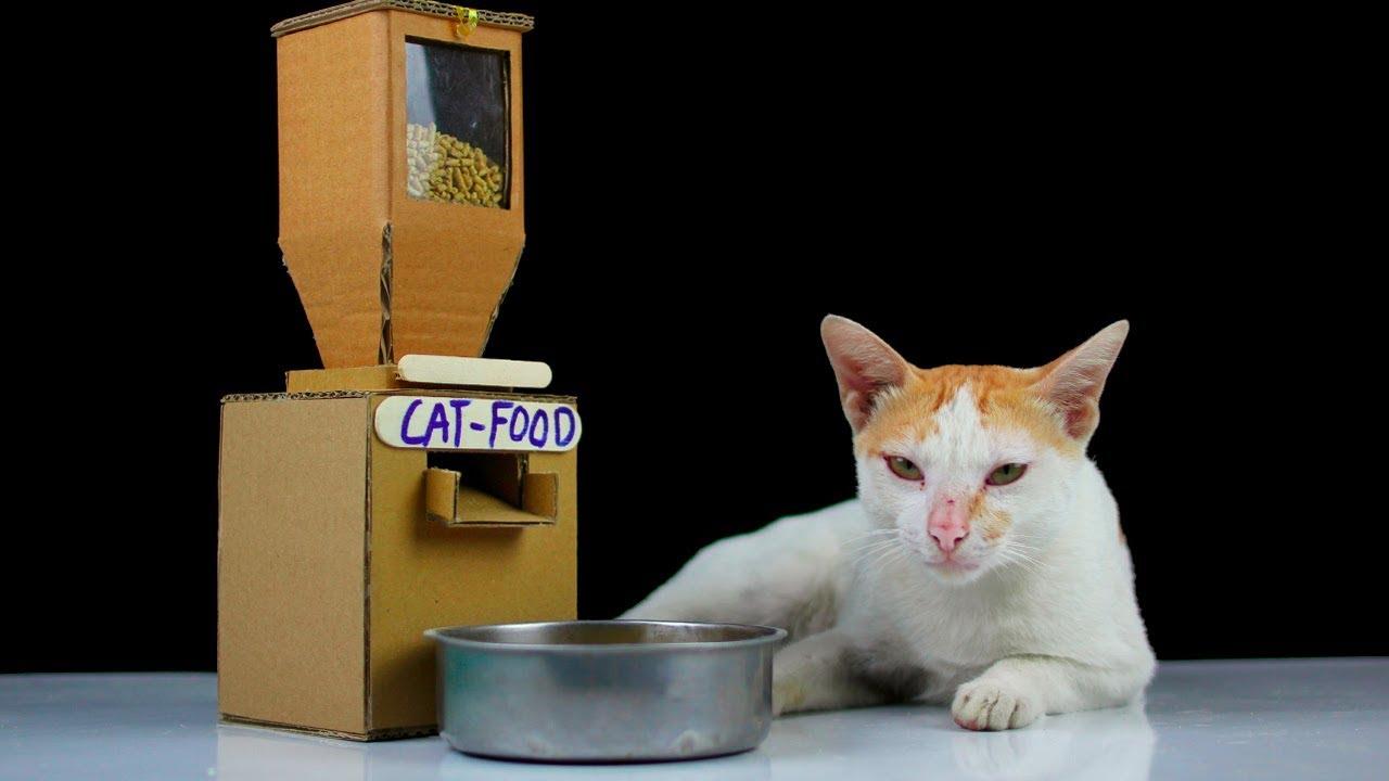 inventos para gatos