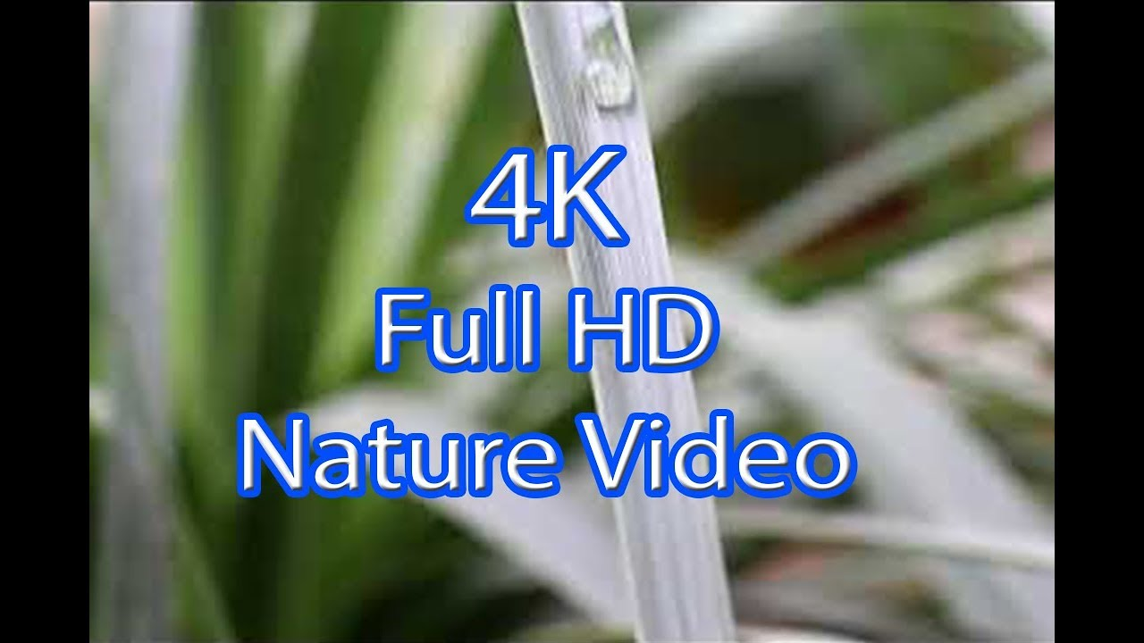 Water Drop Full Hd 4k Nature Background Video Non Copyright Free