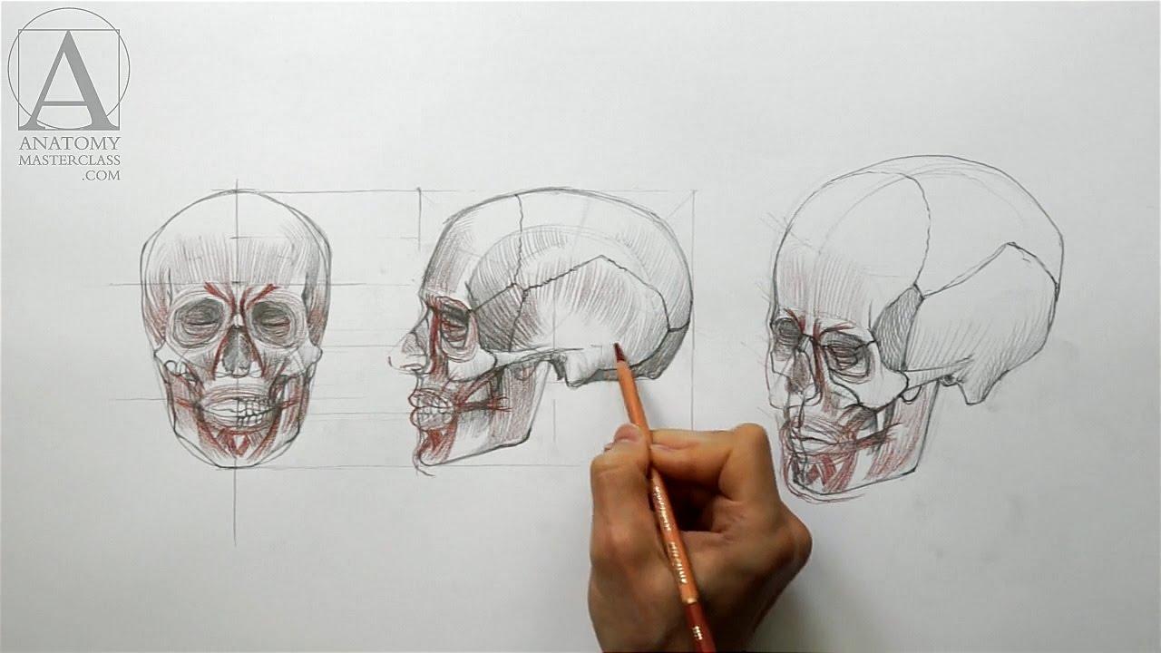 Face Anatomy Anatomy Master Class Youtube