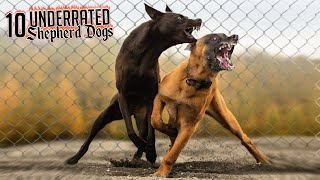 Top 10 Most Underrated Shepherd Dog Breeds