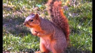 Squirrel Facts - Facts About Squirrels
