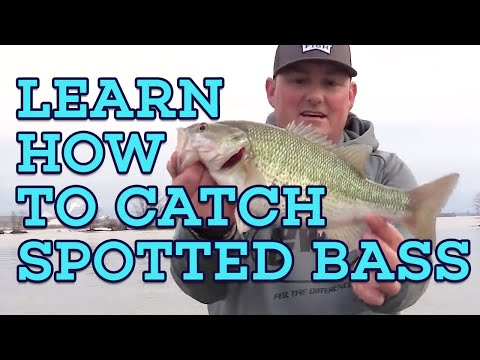 RAPID FIRE SPOTTED BASS CATCHING!Let's Fish #6 SouthWEST Kentucky Lake, Tennessee Spotted Bass
