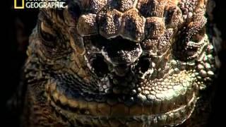 EVOLUCIONES  ( 1 ) - EL VIAJE PERDIDO DE DARWIN