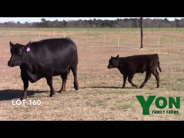 Yon Family Farms Lot 160