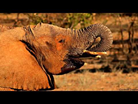The Conversant Traveller's Samburu Safari Game Drive