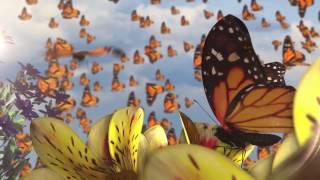 Butterflies - Ziggy Marley Animated Video | ZIGGY MARLEY (2016)