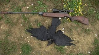 Repeat youtube video Airgun hunting  HW80  ON THE HUNT