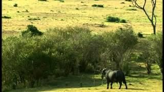 Тайный мир животных  Слоны и другие повелители джунглей