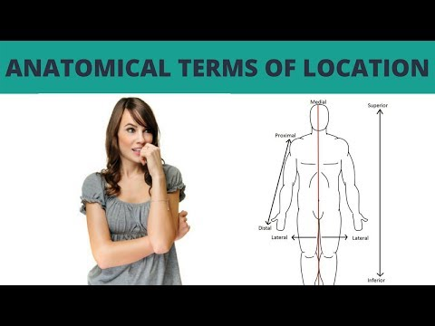 Anatomical Terms of Location - TERMINOLOGY #10