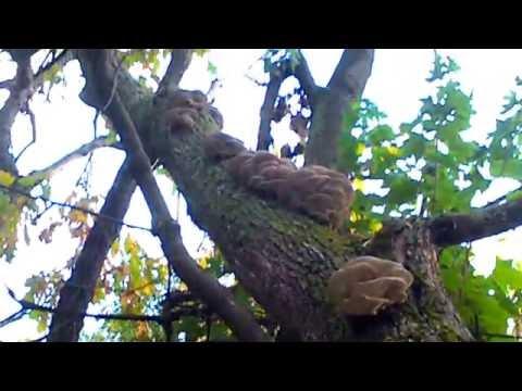 Грибы на пнях и деревьях