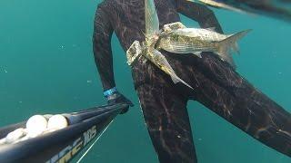 Подводная охота в Черном море. Лучший день отпуска под водой. Spearfishing in Black Sea(Кто скажет что не стоило ехать в Крым охотиться когда на переправе очередь больше суток, думаю многие......, 2015-02-12T08:42:31.000Z)