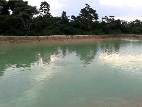 Tambaquis criadero de pacu en bolivia entre rios youtube for Criaderos de pescados colombia