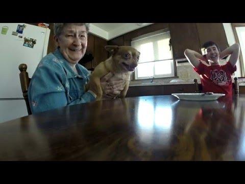 Grandma's vicious little dog