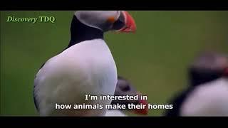 Yuii Nature Animal Documentary