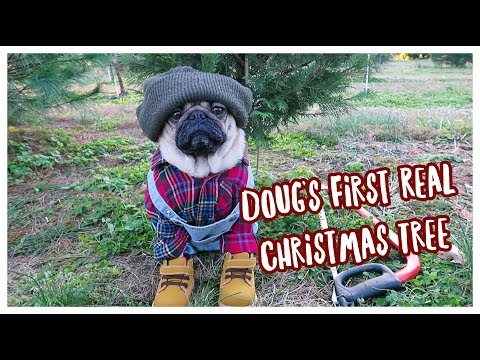 Doug's First Real Christmas Tree!