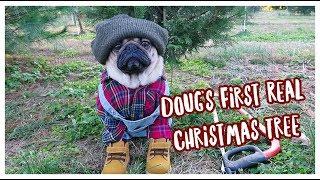 Doug's First Real Christmas Tree! thumbnail