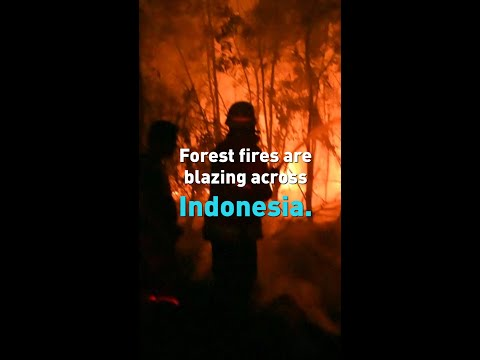Indonesia forest fires, smog brings country to a halt