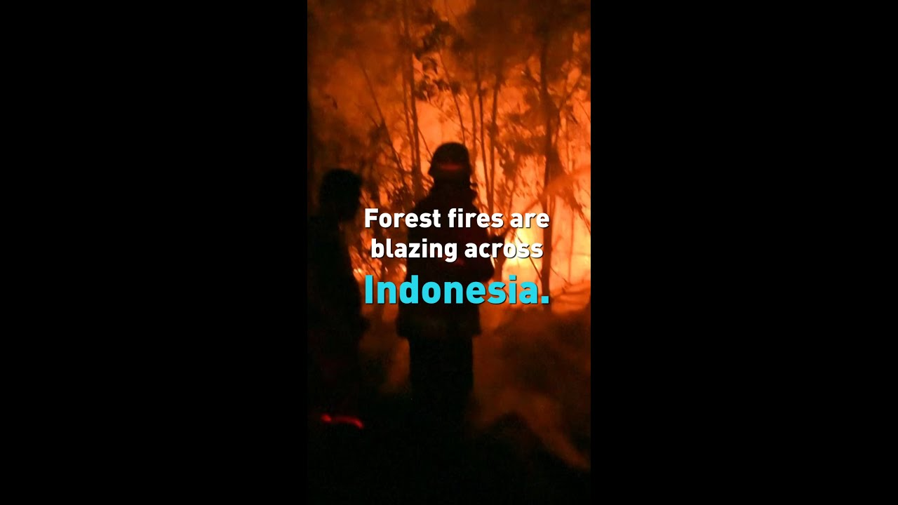 (INDONESIA, September 2019) Indonesia forest fires, smog brings country to a halt