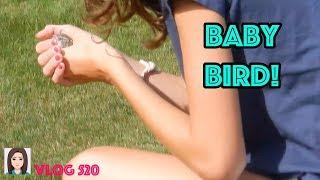 Vlog 520: Baby Bird!