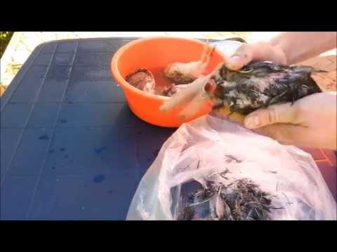 Schildkröten schlachten - Stranded 2 #04 - YouTube
