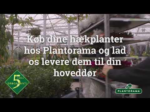 Plantorama Hækplanter
