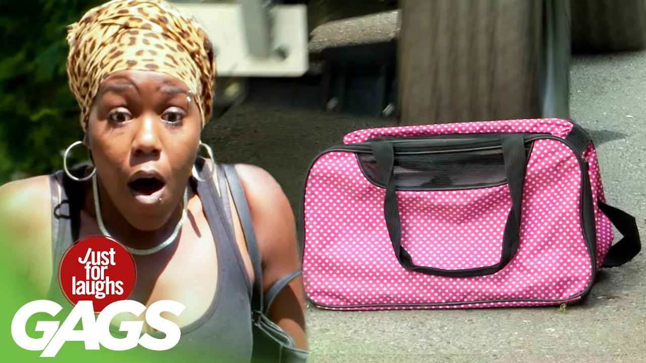 Funny Prank አስቂኝ ሽወዳ: Accomplice Runs Over a Bag of Puppies