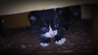 El gatito que estaba cuidando fue horriblemente asesinado.