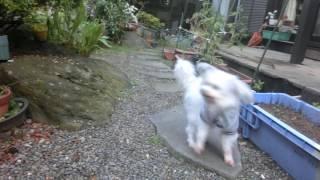 犬の男の子のおしっこは物がある方向にかけるものだと思うんですけど、...