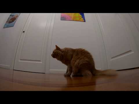 my-cat-catching-crunchy-in-slow-motion---filmed-with-gopro-hero-7-black-at-1080p-120fps