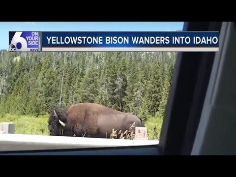 Yellowstone, advertencia de los científicos. Activación de planes de contingencia