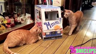 !! NEW Video 2018 Funny dog, cat and animals compilation MUST WATCH !!