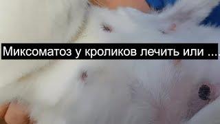 Миксоматоз у кроликов лечить или ....... болезни кроликов
