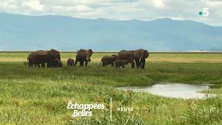 Kenya, un rêve de safari - Échappées belles