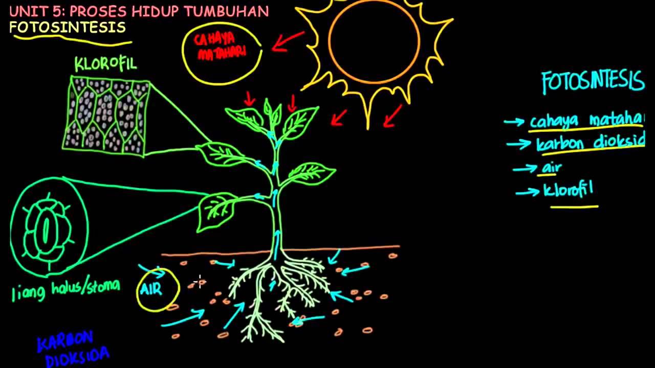 Sains Tahun 4 Fotosintesis Part 1 Youtube