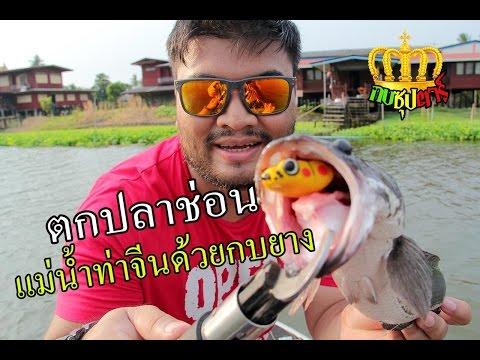 กบซุปตาร์ # ตกปลาช่อนที่แม่น้ำท่าจีนนครปฐม BY Yod911