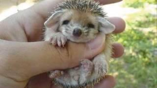 Cute baby hedgehog!!!
