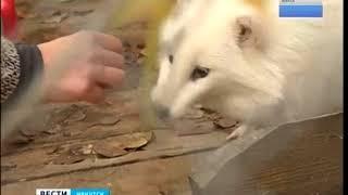 Енотовидная собака редкого окраса поселилась в «Иркутском зоосаде»